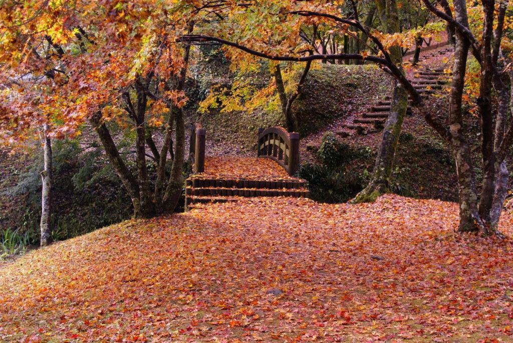 用作公園 赤い絨毯