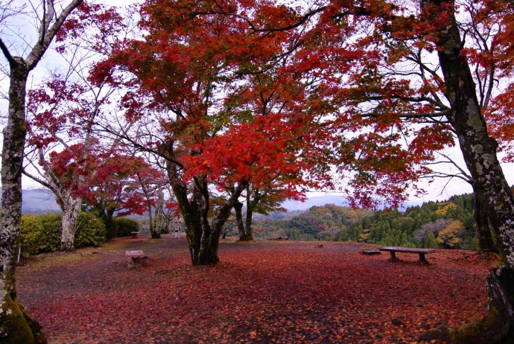 岡城跡 赤い絨毯
