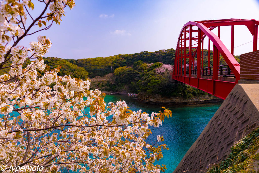 対馬 赤島大橋 桜