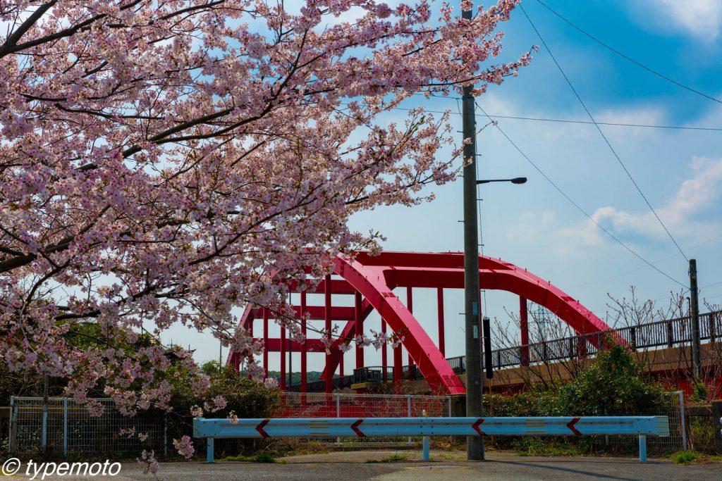 万関橋の桜