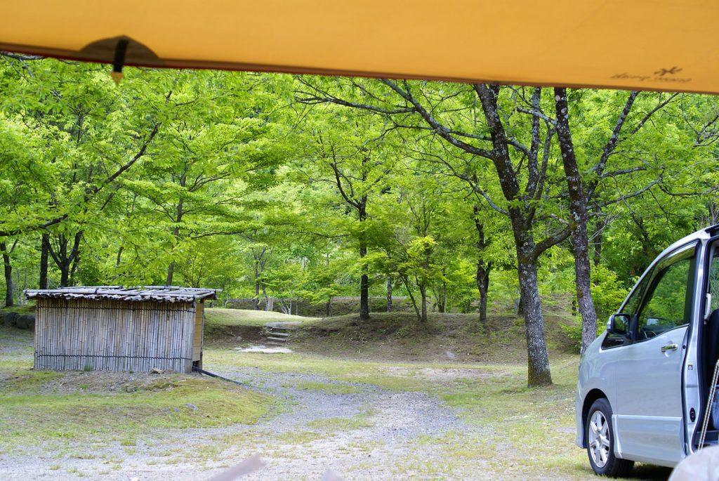 山鳥の森オートキャンプ場の新緑