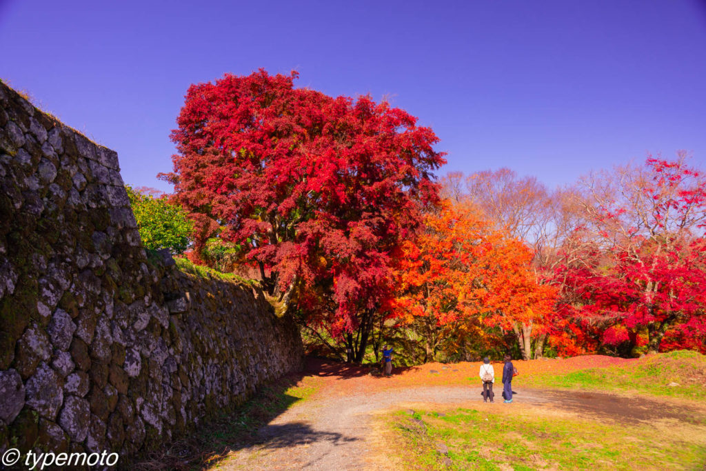 岡城跡 紅葉