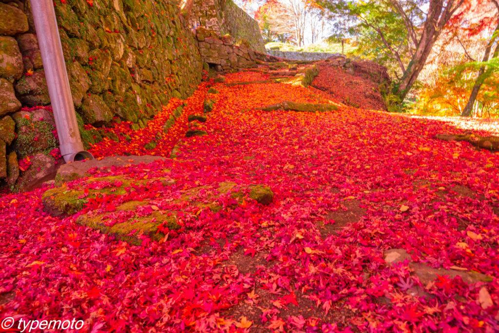 岡城跡 紅葉 赤い絨毯