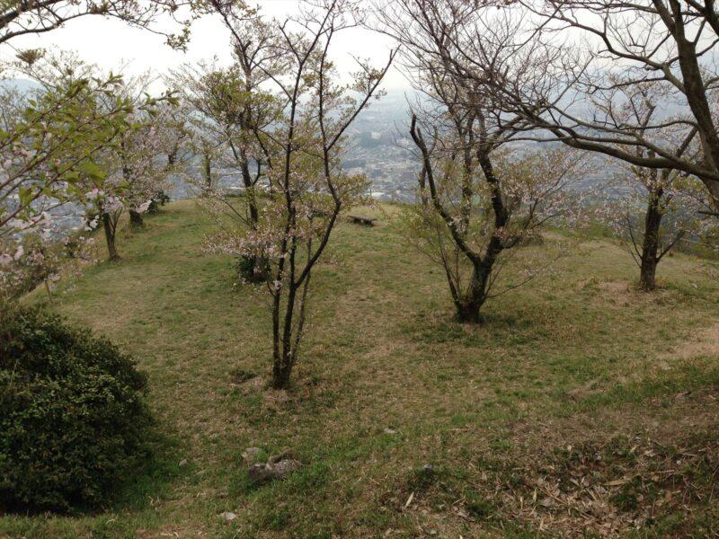 岩屋城跡 桜