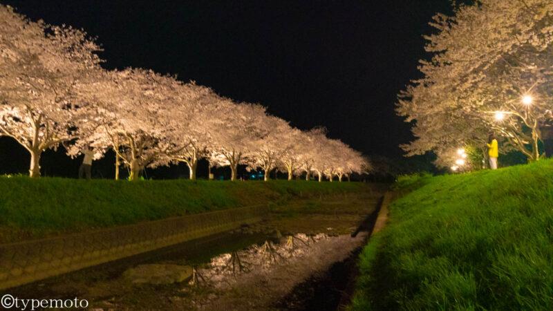 草場川 公園横 夜桜 リフレクション