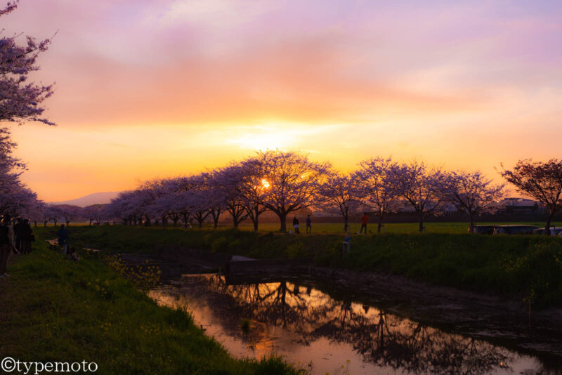 草場川桜並木 夕焼け
