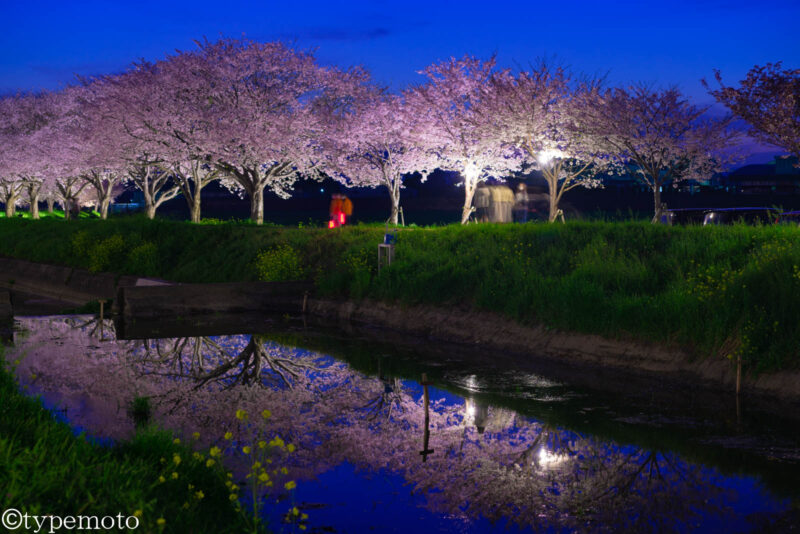 草場川桜並木 夜桜 リフレクション