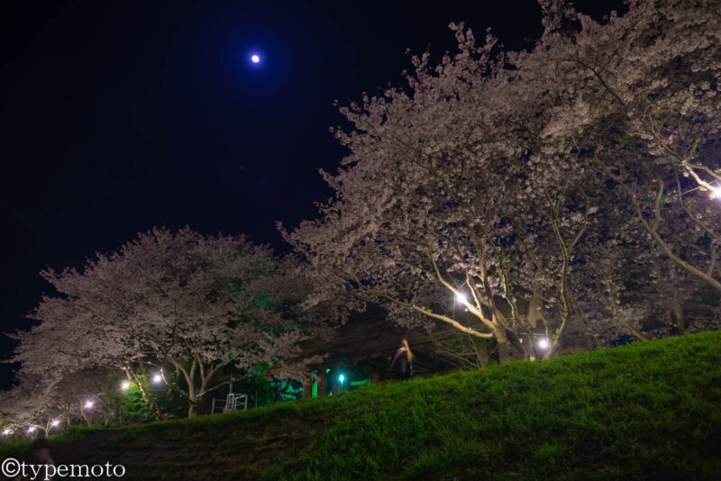 草場川桜並木 夜桜 月