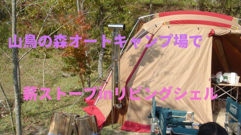 山鳥動画05